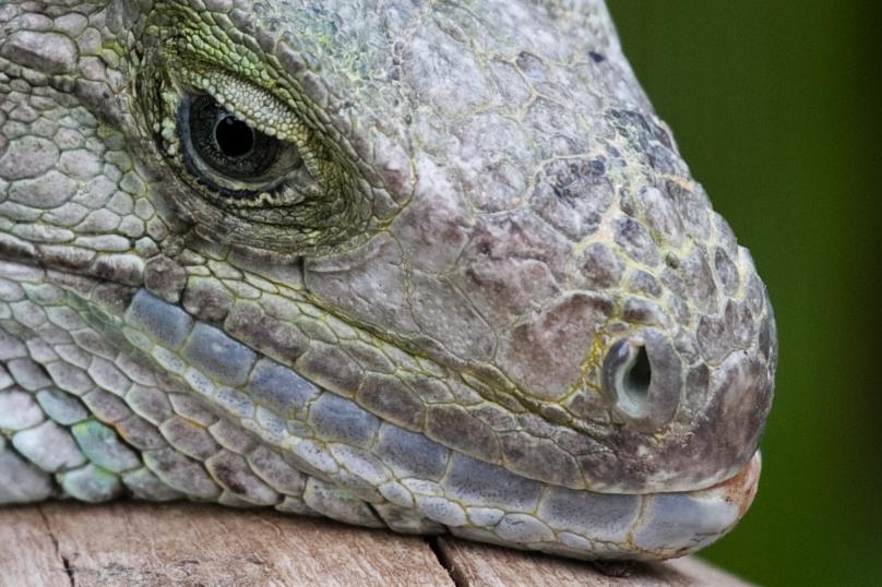 Raptor - modern