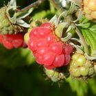 Raspberrys