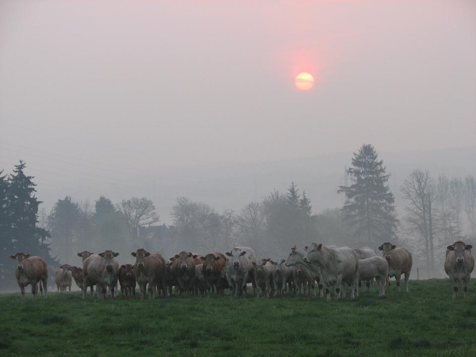 rassemblement à l'aube