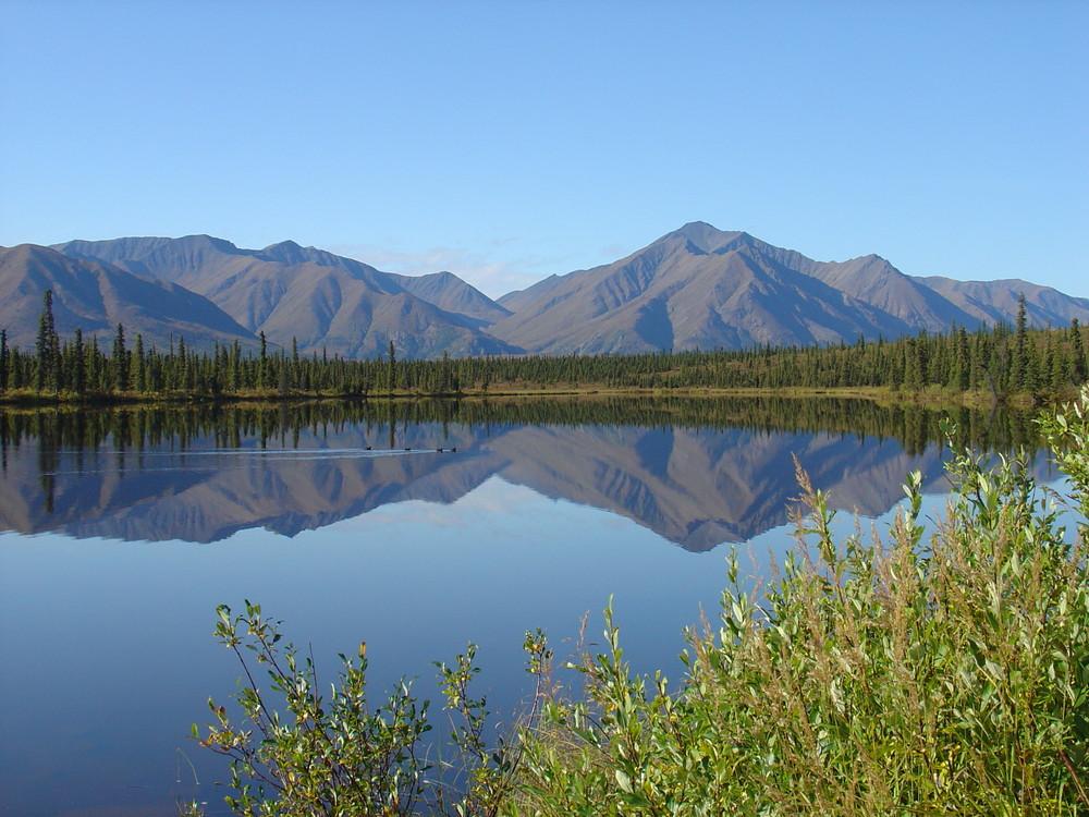 Rast am Denali-Highway/Alaska