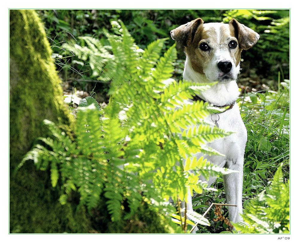 Rast im Wald