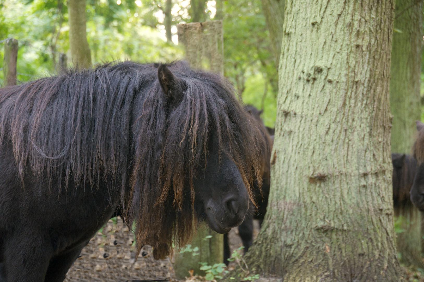 Rasta - Pony 1