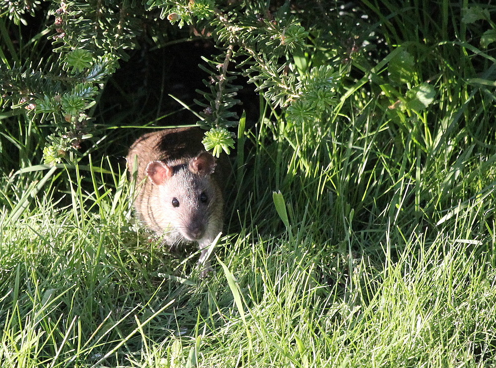 ...Ratatouille...oder neuer Untermieter