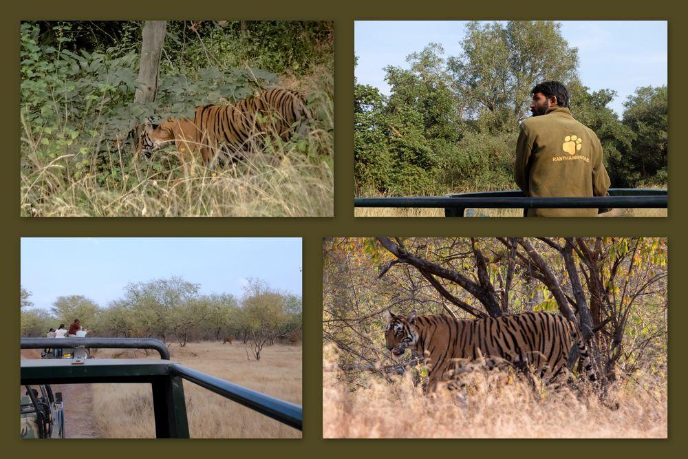 Rathambore Nationalpark 2