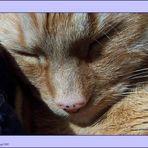 RATZKATZ - Katzen wollen leben !