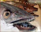 Raubfisch