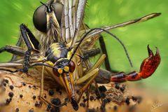 Raubfliege vs. Skorpionsfliege
