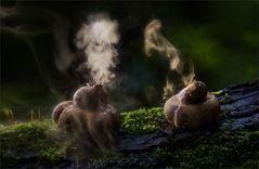 rauchende Erdsterne