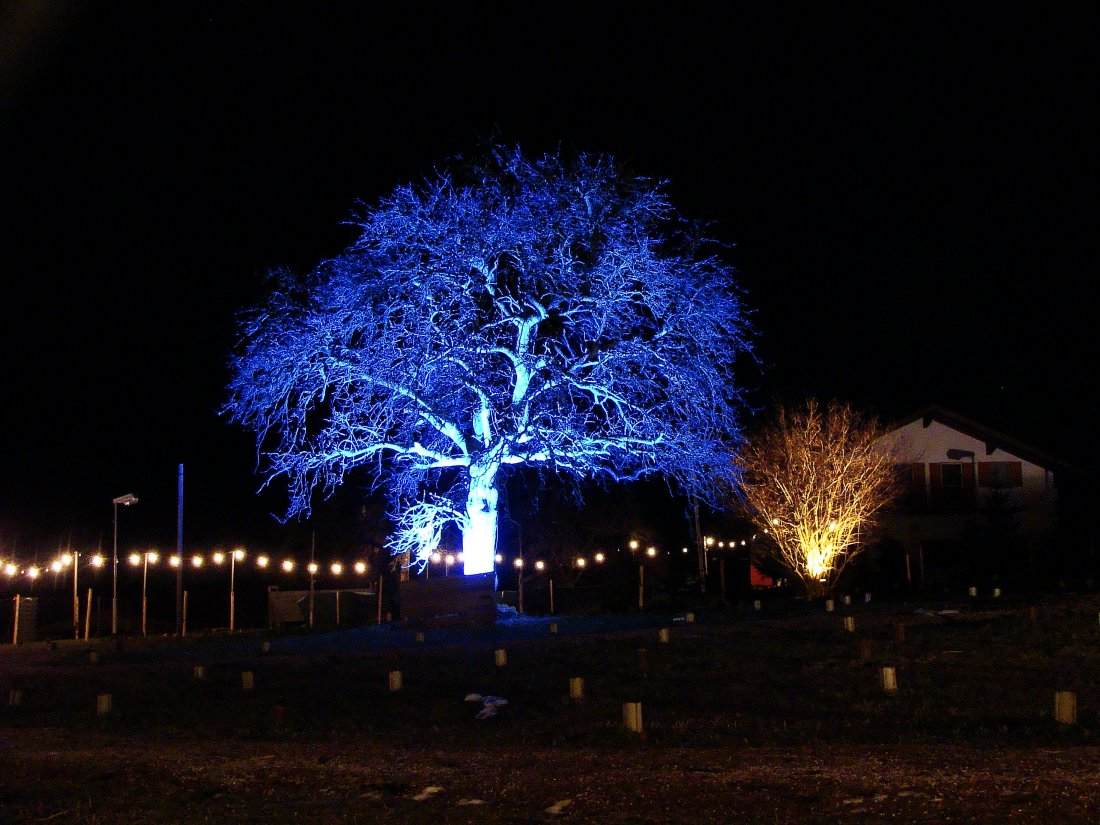 "Rauhnacht - ""Wir machen des Nachts unsere Bäume an"""