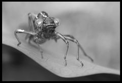 Raumschiff Libelle