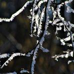 Raureif auf den zarten Zweigen ,