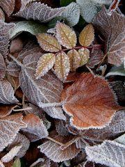 Raureif auf Herbstblätter