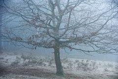 Raureif im Nebel