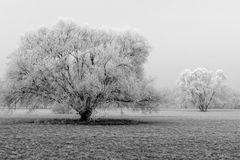 Raureifbäume