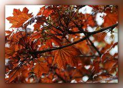 Rauschen im Blätterwald