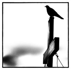 Raven on the cross