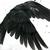 Raven Snow