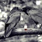 Ravenlove