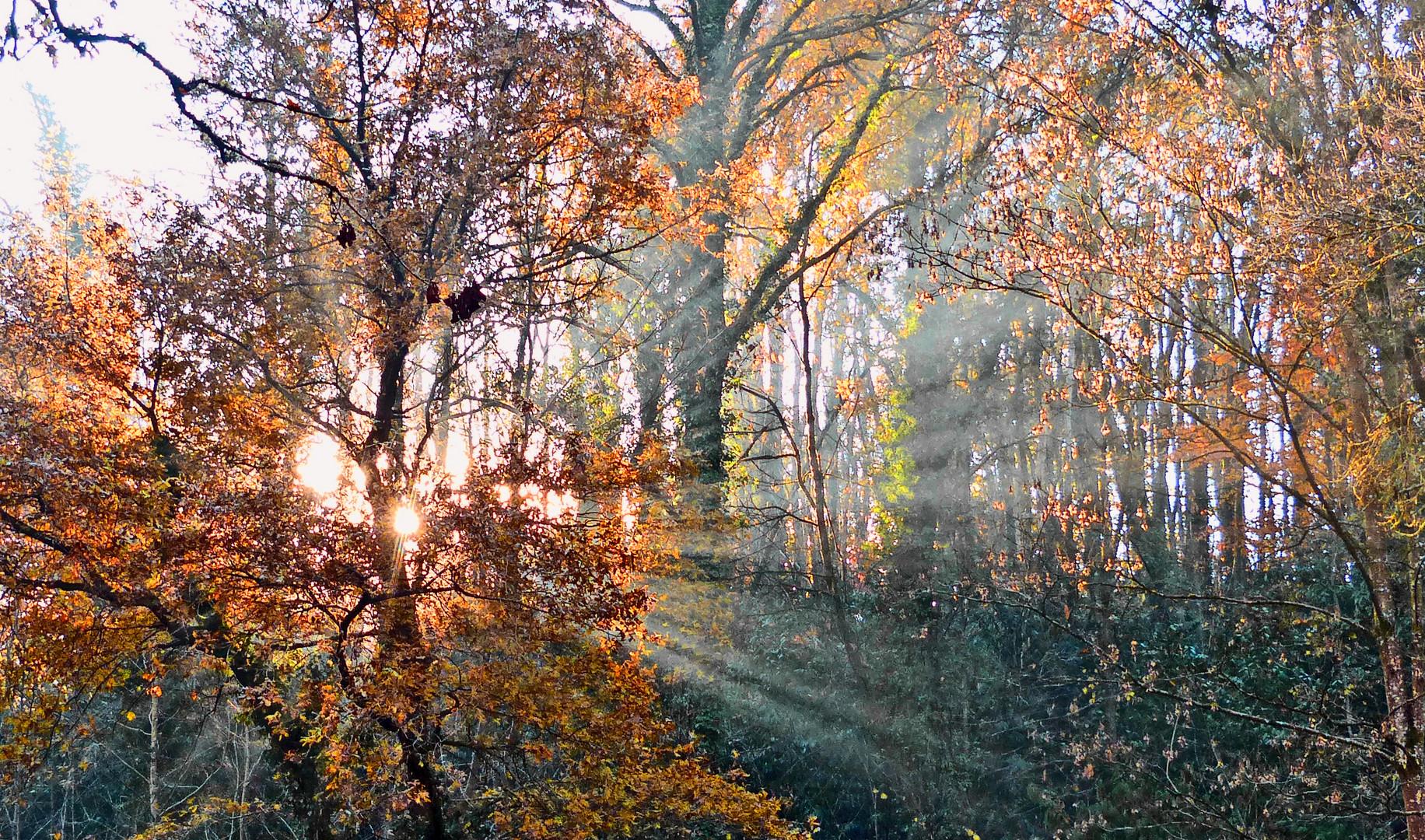 Rayons de fin d'automne