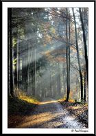 Rays on the Path