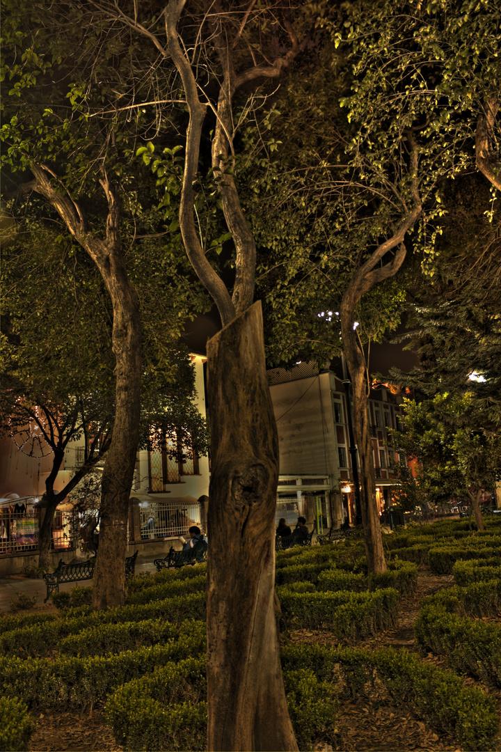 Árbol en Coyoacan México D.F.