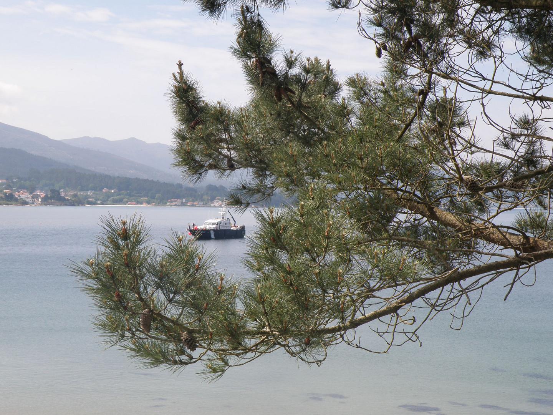 Árbol y barco al fondo