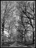 Árboles - Hyde Park -
