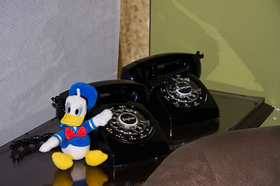 Real Duck is calling you