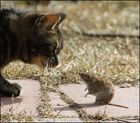 Real Tom and Jerry - silent conversation