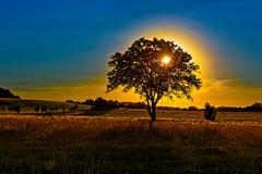 Realität wird überbewertet :: Sonnenbaum