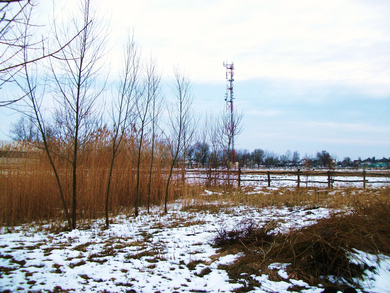 Rear garden in winter