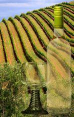 Reben bei Tokara~Glas + Flasche