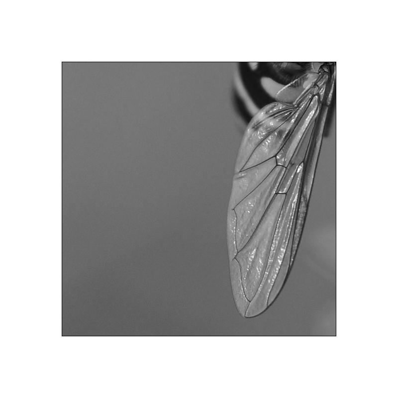 Rechter Flügel