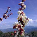 Recojiendo polen