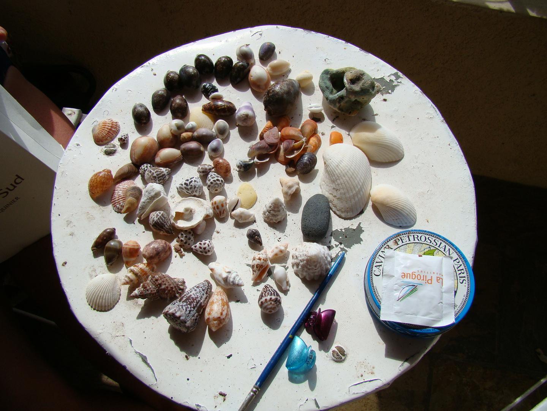 récolte de plage