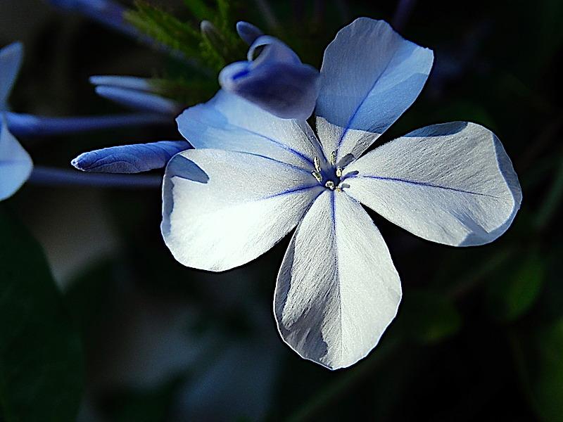 Recuerdos.....de un Jazmín Azul