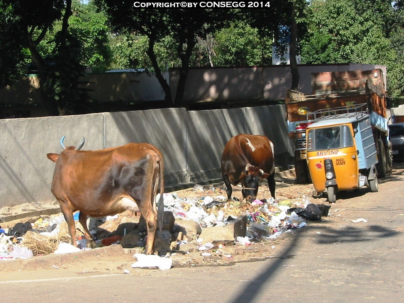 Recycling by cows