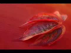 red and fall(en)