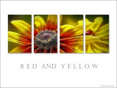 Red and Yellow ...