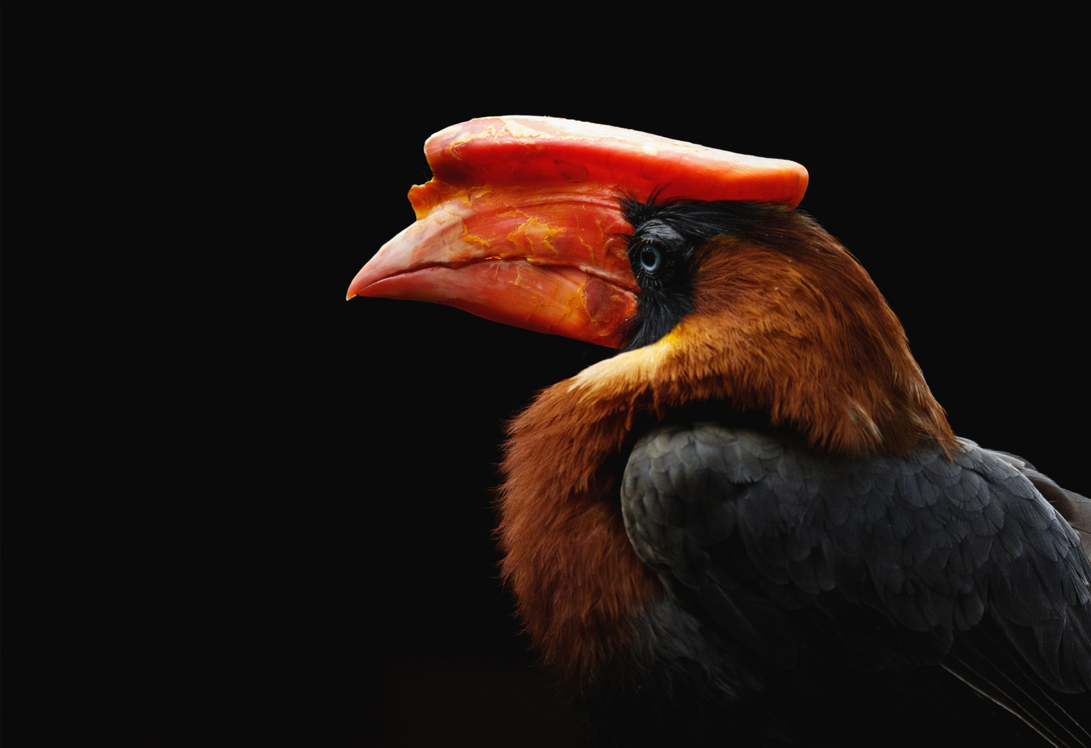 Red beak.