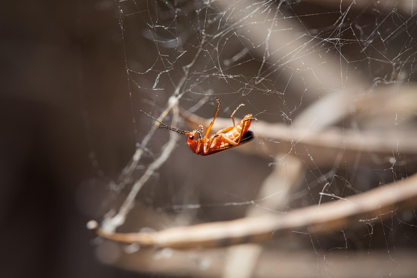 red bug I