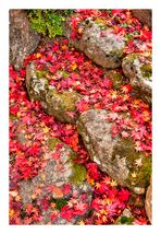 Red Carpet-2
