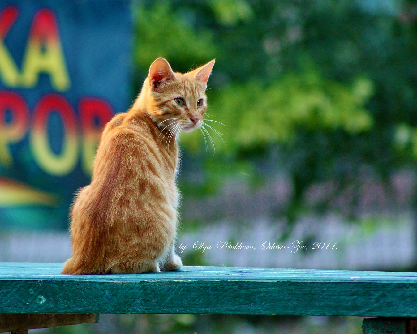 red cat on the blue bench