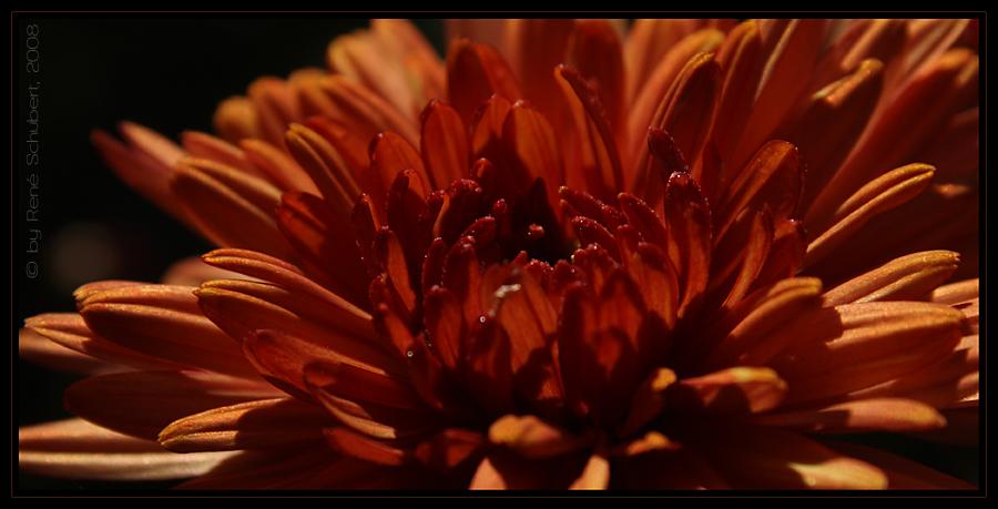 ~~ red flower ~~