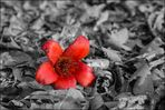 Red Flower ~ Expiration