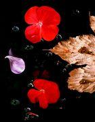 red flowerheads