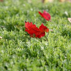 red-green