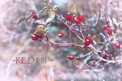 ~red hip~