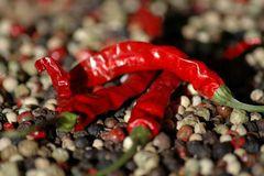 Red Hot Chilli Pepper