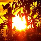 Red hot Sun
